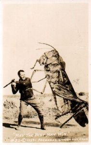 338e302d672011147f4c3a5c14c4fe9e--insecticide-picture-story